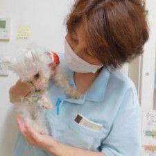 「さくらの里山科」で犬の世話をする職員。職員は犬や猫のユニットごとに専属配置される
