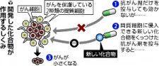 メラノーマに効果、徳島大など化合物開発に成功…腫瘍を4分の1以下に