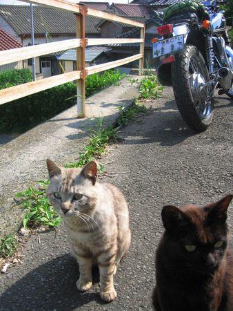 田代島のネコたち