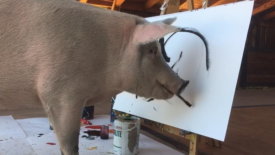 南アで注目の新人画家はブタ、「ピガソ」が初の個展(字幕・16日)