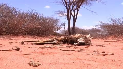 飢饉の瀬戸際、干ばつが進むアフリカの角ソマリランド