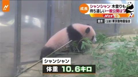 赤ちゃんパンダ「シャンシャン」、生後160日最新映像