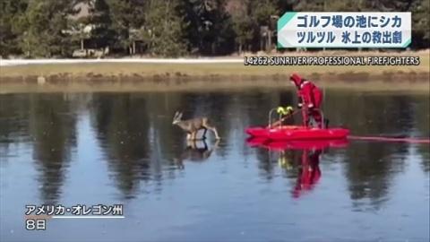 米オレゴン州、池の氷の上で遭難 シカ救出劇