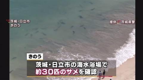 茨城・日立の海水浴場にサメ30匹、安全確認できるまで遊泳禁止