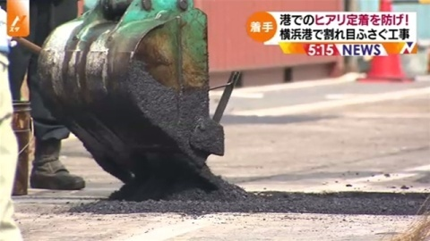 ヒアリ定着防止、横浜港で割れ目ふさぐ緊急工事