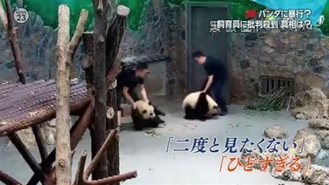 中国の動物園でパンダに暴行か、飼育員に批判殺到