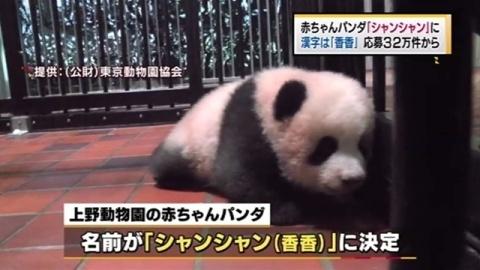 赤ちゃんパンダ、名前は「シャンシャン(香香)」に